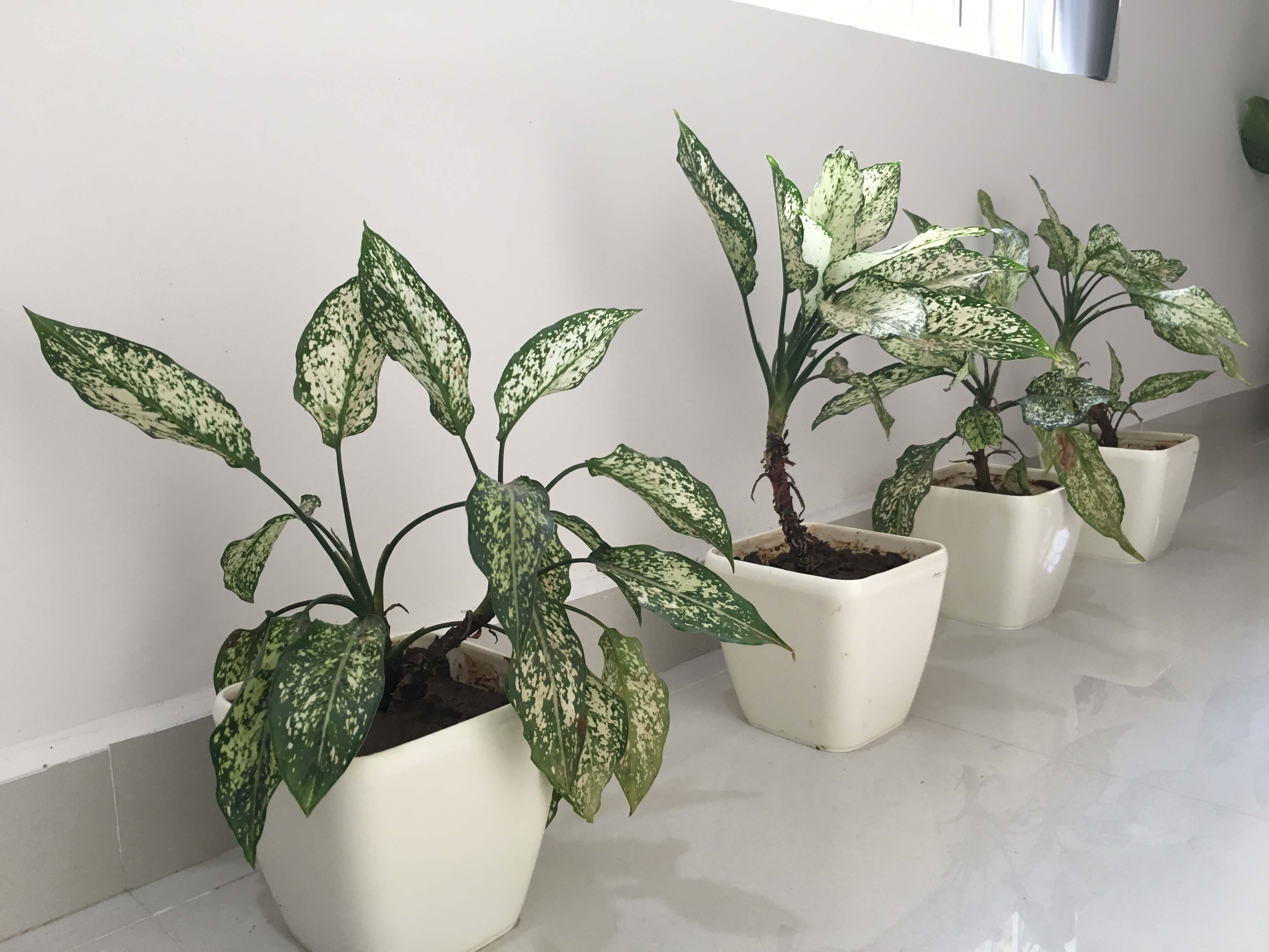 Yuccabe Italia Planters Review